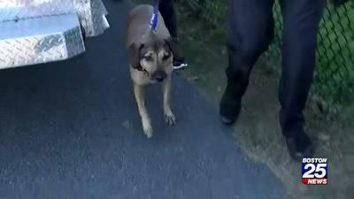 Multiple crews rescue dog stuck inside Millennium Park drainpipe for 2 hours