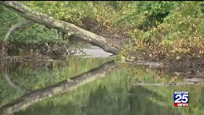 Noxious odor along Charles River puzzles area residents