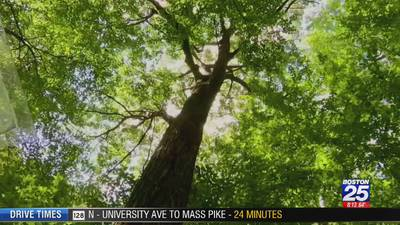 How a tree in Central Mass. is using Twitter to share climate change data