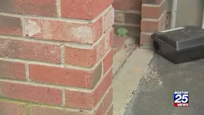 Melrose addresses rat infestation with stricter trash measures