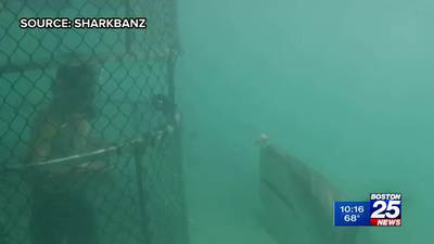 Company claims special device can prevent shark attacks – but does it work? See it put to the test
