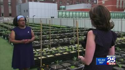Roxbury Zip Trip   Gets Real about Fighting Hunger