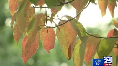 A fall colors arrive, the great outdoors is open for business
