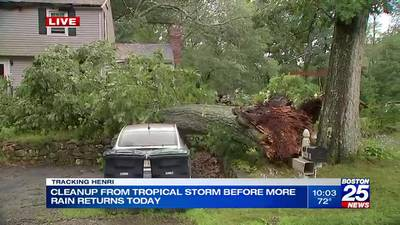 Homeowners work to clear fallen trees after Henri strikes New England