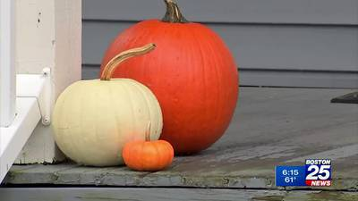 Watertown officials asking residents to modify Halloween decorations as rat activity surges