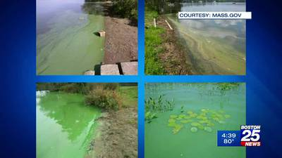 20 MA lakes and ponds under advisories for 'harmful' levels of bacteria
