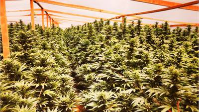 Senate Democrats push new bill to decriminalize marijuana at federal level