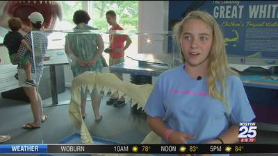 'Gills Club' getting girls into science through shark research