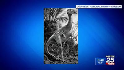 Massachusetts one step closer to having official state dinosaur